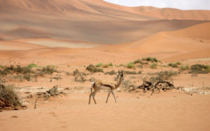 Discover Namibia.  An Unforgettable Country.