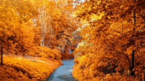 15 Best Places To See Fall Foliage In USA